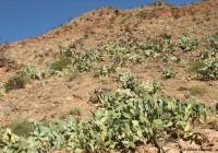 Dans le pays, il y a des cactus...