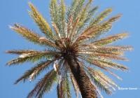 Palm tree © Xavier Desmet - alohabrah.fr