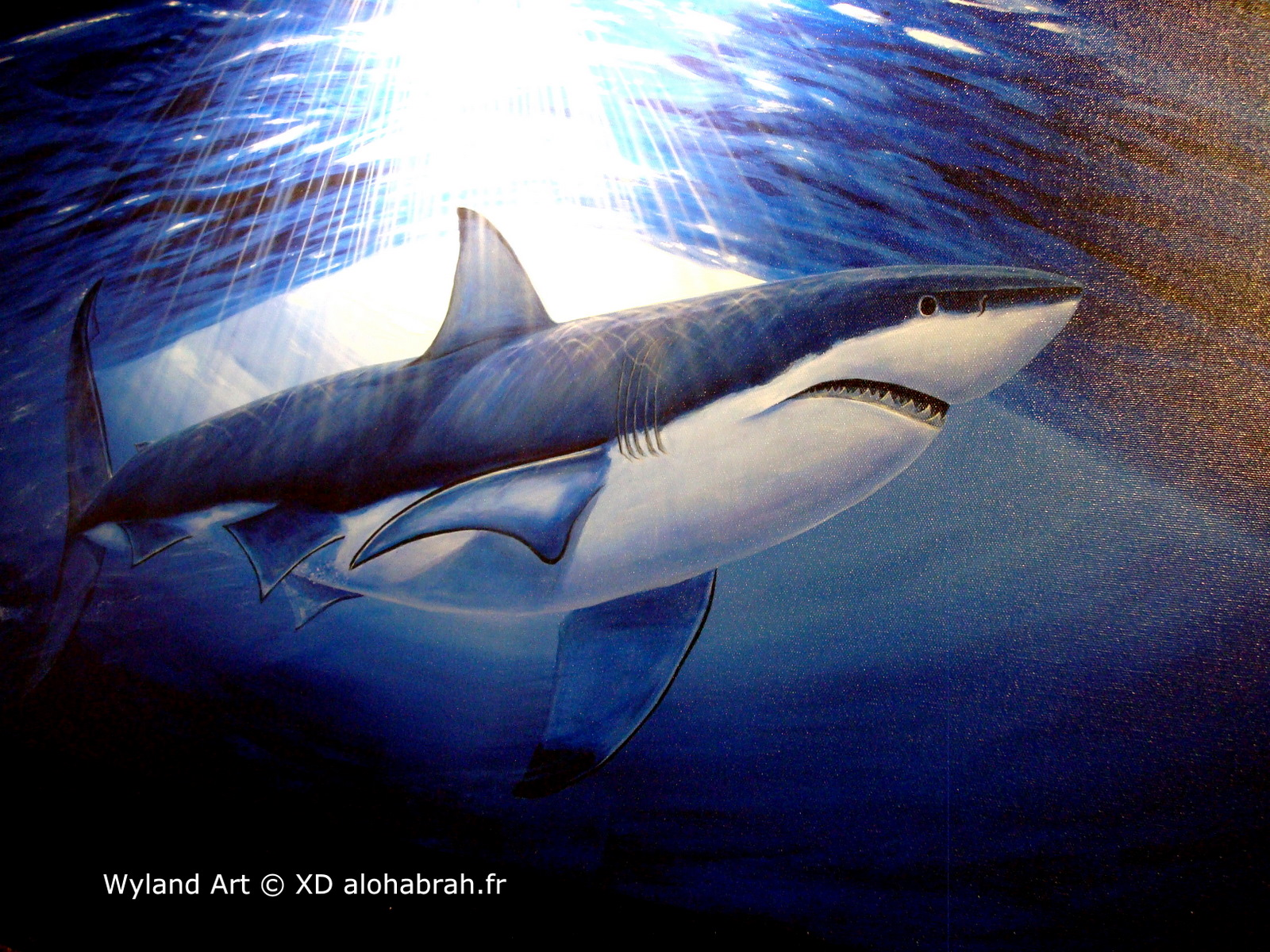 Big Shark - Wyland Art © XD alohabrah.fr