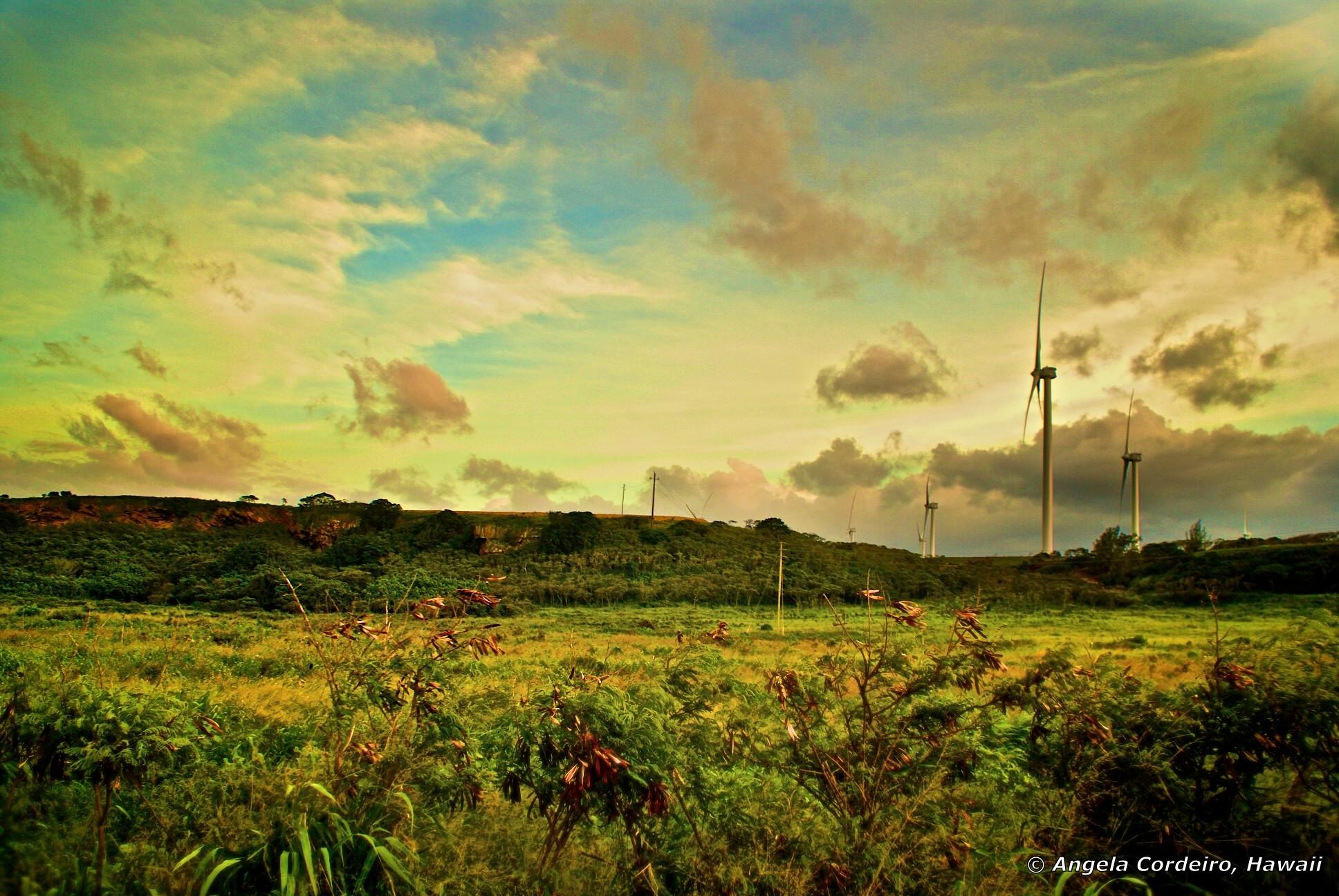 Keep the country COUNTRY © Angela Cordeiro - Hawaii.jpg